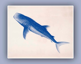 Nature printed Whale-Shark, 10x8 Blue print,  Marine Wall Decor, Nautical art,  Seashore art  Print, Coastal Living
