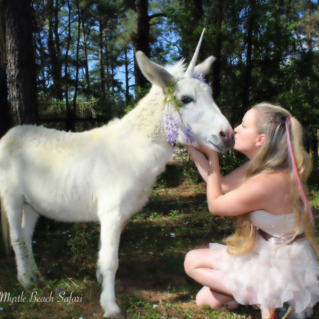 agrandir - Poney Licorne