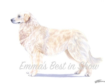 Kuvasz Dog - Archival Fine Art Print - AKC Best in Show Champion - Breed Standard - Working Group - Original Art Print