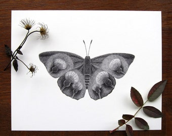 Thistle Butterfly - 8x10 print