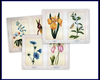 Antique Botanical Illustrations c1895 - Purchase 3 sets of images for 27.00