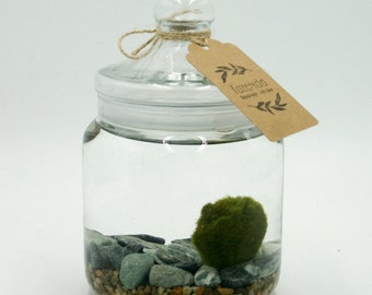 Sea gravel Bottom, with glass ampoule