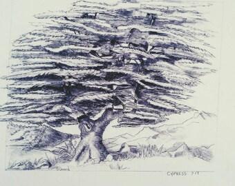 Ancient Cypress Original drawing