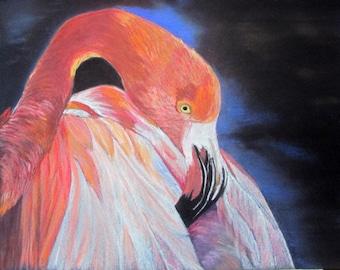 Flamingo - Camargue - pet portrait in pastel - animal Art bird