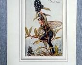 Privet Flower Fairy Vinta...