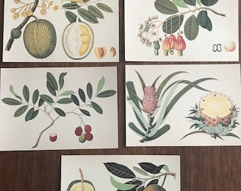 """125 Postcards """"Oriental Fruits"""" Botanical Reproductions Printed in Italy on cream cardstock"""