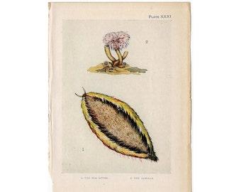 c. 1907 ANTIQUE SEA LIFE lithograph - original antique print - sea life marine beach ocean - sea worms & sabella