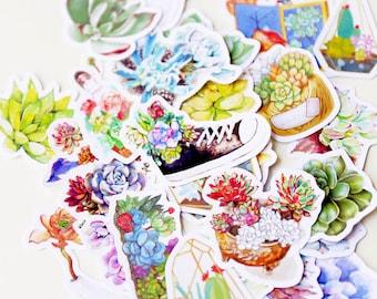 Succulent Stickers/ filofax stickers/Cactus Stickers/planner stickers/die cut stickers/erin condren/