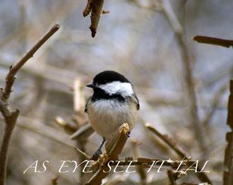 Sweet Chickadee photo PRINT 4x6