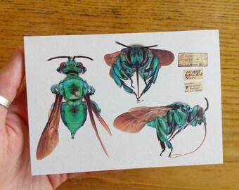 Orchid Cuckoo Bee greetings card