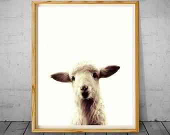 Lamb Nursery Decor, Lamb Print, Lamb Face, Nursery Wall Art, Cute Baby Lamb Animal, Printable Lamb Photo, Farm Animal, Large Poster, Artwork