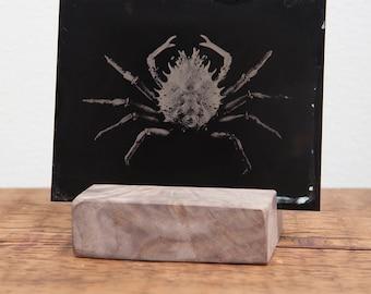 Crab on Black, Original Plate: 3.5x4.5 inches