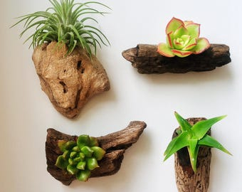 Set of 4 Authentic Pacific Driftwood & California Succulent Handcrafted Magnet Sculptures