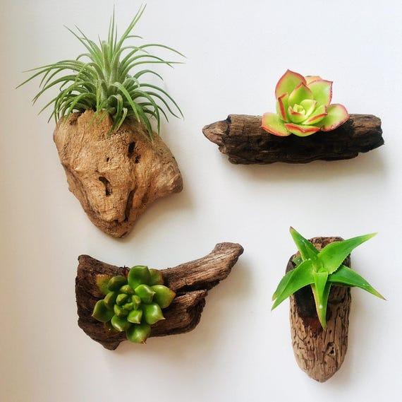 Set Of 4 Authentic Pacific Driftwood & California Succulent