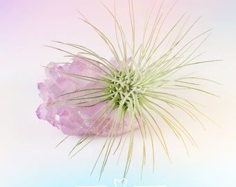 Lavender Purple Aura Quartz Crystal Air Plant Garden, Lavender gifts, Best friend gift, Air plant healing, Nature Lovers Gift
