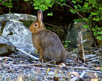 PHOTO CARD, snowshoe rabbit, bunny, rabbit decor, bunny decor, note card, blank note card, stationary, paper goods, Ellen Strope