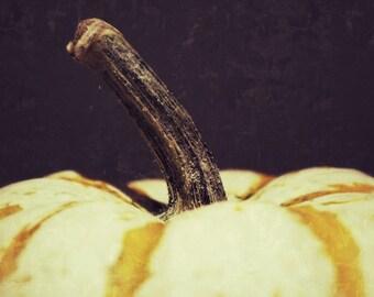 Autumn Wall Decor, Pumpkin Photograph, Still Life Photo, Food Photography, Kitchen Wall Decor, Harvest Wall Art
