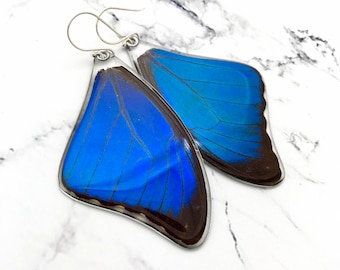 Butterfly Earrings, Blue Morpho, Real butterfly, Nature inspired, Spiritual gift, Mother nature, great gift, Menelaus, earrings or pendant