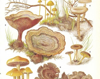 Vintage Fungi Coloured Book Plate - Fungi - Ideal For Framing # 47
