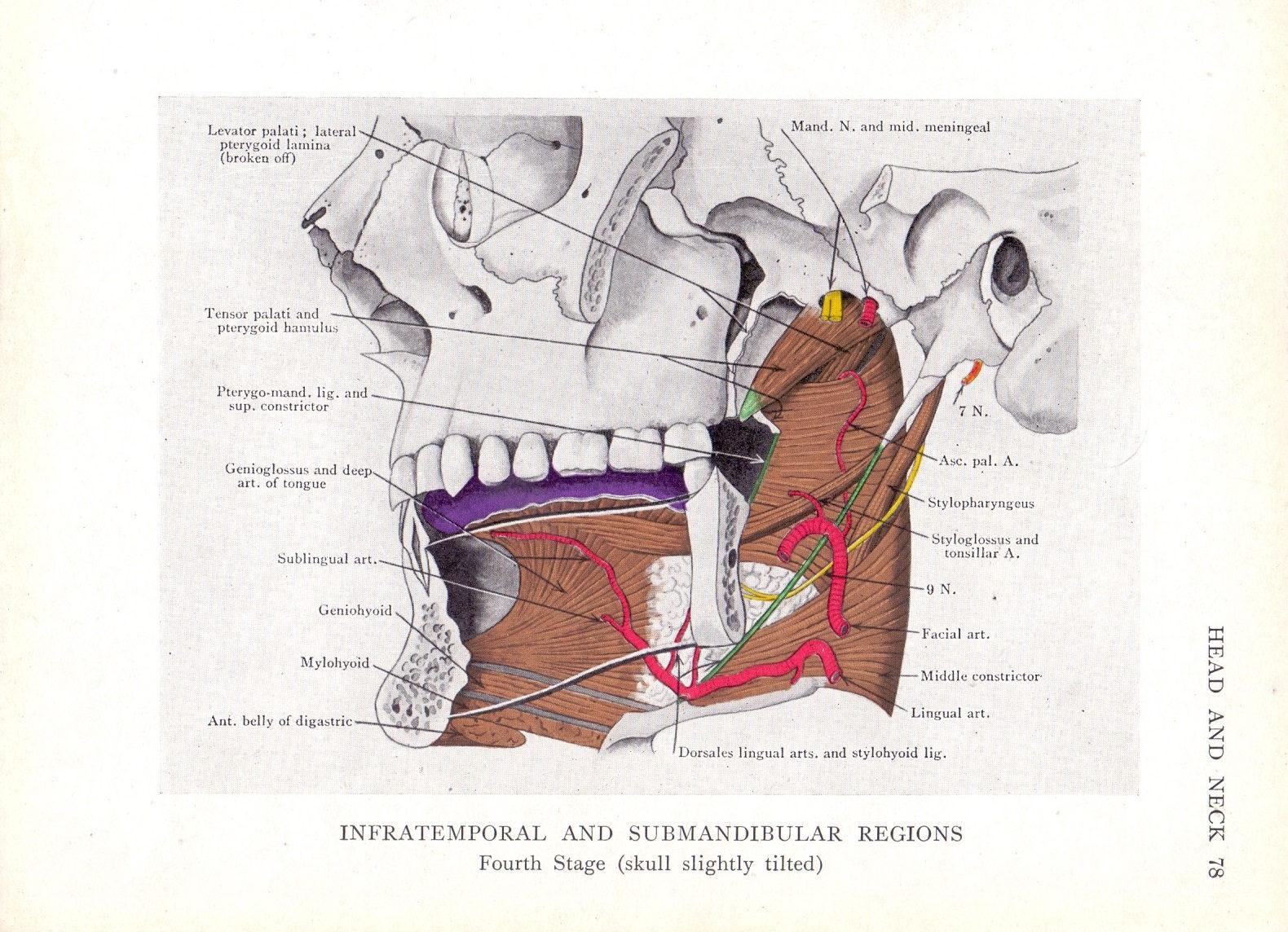 Antique Medical Print Human Anatomy Anatomy Biology