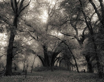 Cathedral Wood,Fine Art Photography,Black and White Landscape, Woodland, Magical, Mysterious Trees,Nature,Dramatic,Misty,Foggy,Holy,large