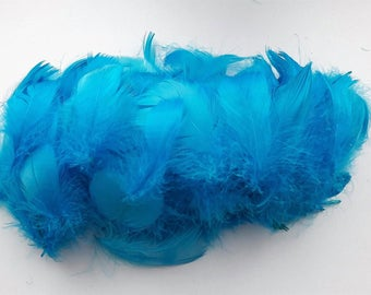 set of 10 turquoise blue feathers 5-10cm