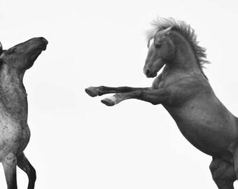 Wild horse photography--Pryor Mountain mustang