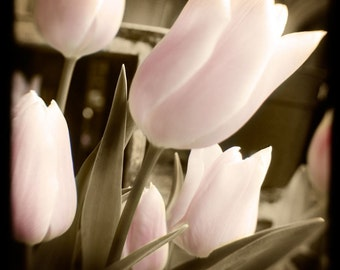 Sepia Pink Tulip TTV Photograph--Pink Tulips on Sepia-- Fine Art