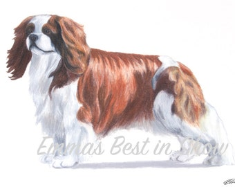 Cavalier King Charles Spaniel Dog - Archival Fine Art Print - AKC Best in Show Champion - Breed Standard - Toy Group - Original Art Print