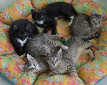Kittens snoozing on their colorful, comfy bed