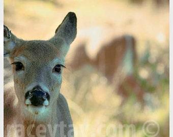 Nature Photography, Deer Print, Rustic Wall Decor, Fall, Brown, Green, Tan, Cabin Decor