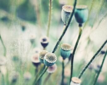 Botanical art mint green rustic wall art photography print gardener gift poppy pods garden art mint beige sage  - Pod Stems