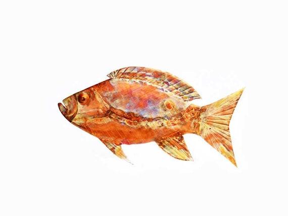 Kupfer Schnapper Fische