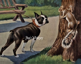 "Dog Art, Boston Terrier and Squirrel Saying ""Good Morning""  #113"