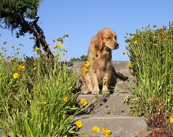 Smell the Flowers, Golden Retriever Photo, Blank Card