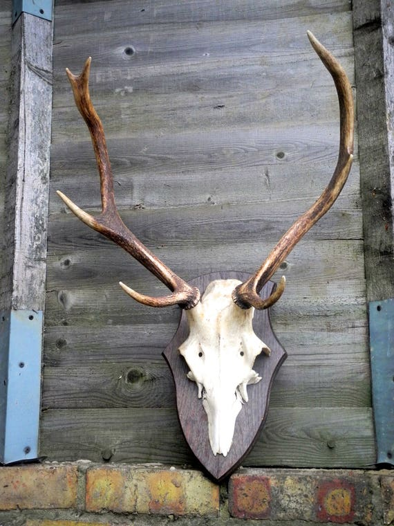 Vintage 6 Point Reindeer Antlers On Plinth Dated 1975