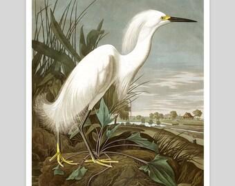 Snowy White Heron by John James Audubon Vintage Art Print