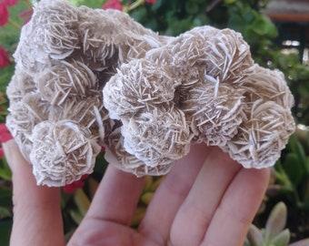 Desert Rose cluster