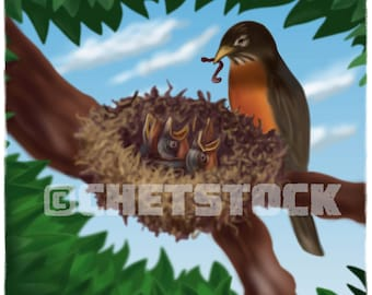 Robin With Nest