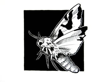 Moth Original Ink Drawing