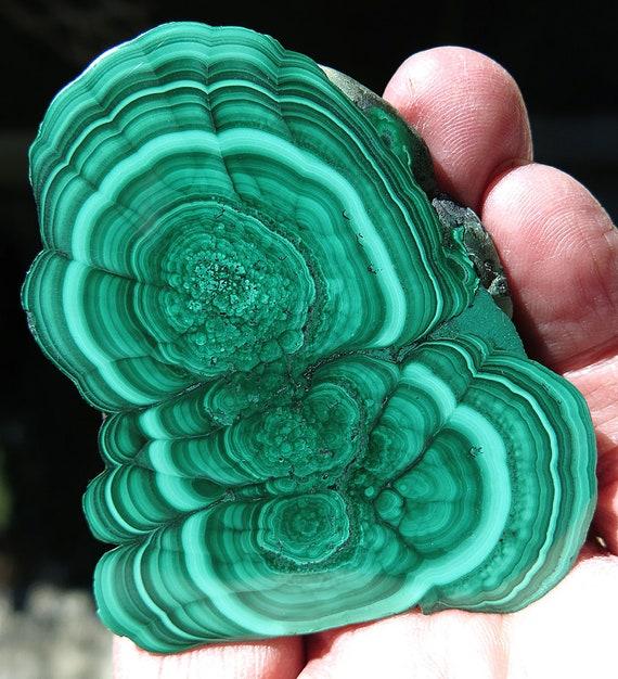 Ringed Malachite polished slice from Katanga D.R. Congo