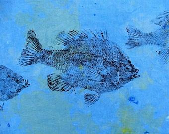 GYOTAKU fish Rubbing Three Sunfish 8.5 X 11 quality Art Print Bluegill Cottage Decor by artist Barry Singer