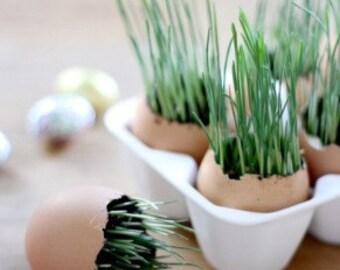 Wheatgrass Capsules (Organic) (BEST SELLER)