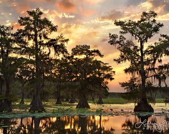 "Swamp Photo Print | ""Caddo Lake Sunrise"" 