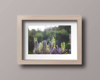 Lavender Wallpaper, Photography Print, Digital Download