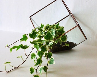 Handmade cube glass terrarium/ glass terrarium/ handmade terrarium/ terrarium/ cube terrarium