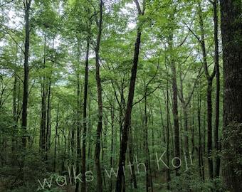 Coosa Backcountry Trail - Blue Ridge Mts. GA #6