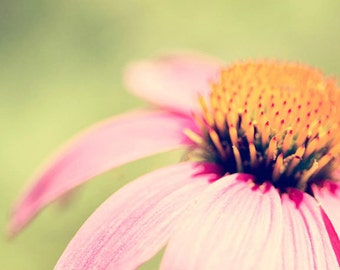flower photography, pink home decor, pink flower, nature photography, coneflower, pink nursery art
