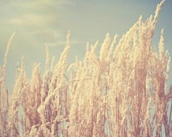 summer nature photography / light, pale blue sky, sun, sunshine, wheat, dry, beige, neutral, minimalist / light / 8x10 fine art photo