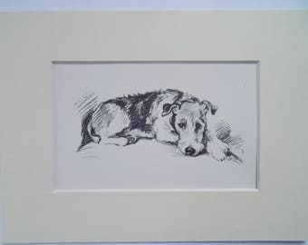 "Lakeland Terrier dog print by Lucy Dawson dated 1935 in 6""x8"" mount ready to frame"
